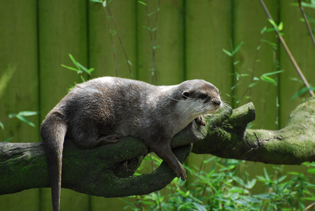 Otter tanding on a log