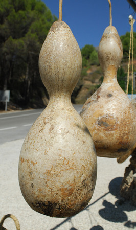 Two Gourds hanging at a roadside market