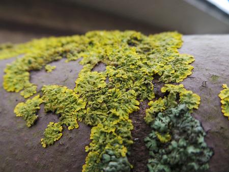 Macro Photo of Lichen on Brick
