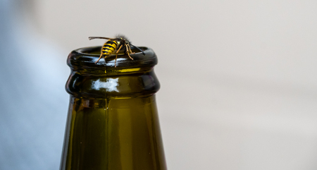 A wasp like hoverfly on the lip of a green glasss bottle, as would be annoying at a picnic 版權商用圖片
