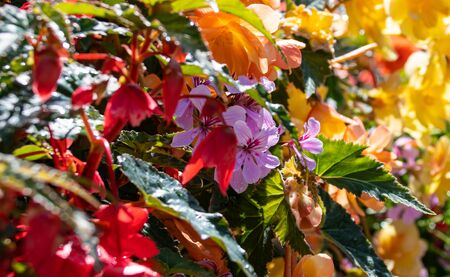 Brightly coloured flowers growing in a London street