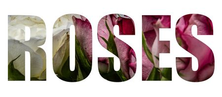An image of a rose forming the word Roses on a whie background Banco de Imagens