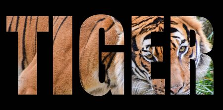 An image of a Tiger forming the word tiger on a black background Banco de Imagens