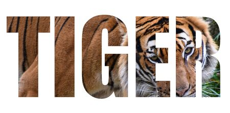 An image of a Tiger forming the word tiger on a whie background