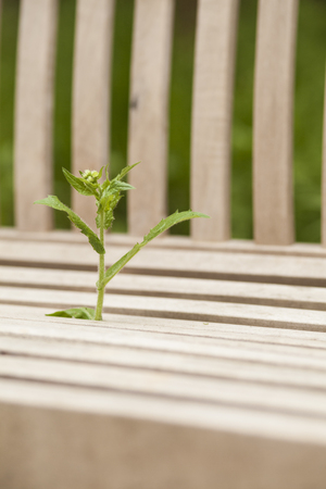 horizontals: Sprouting Plant through Park Bench