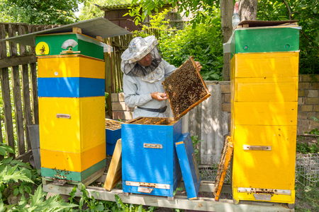apiarist: Beekeeper on apiary. Beekeeper pulling frame from the hive