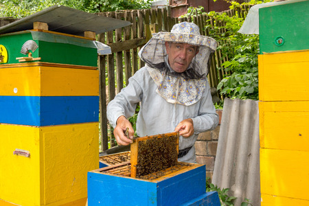 apiculture: Beekeeper on apiary. Beekeeper pulling frame from the hive