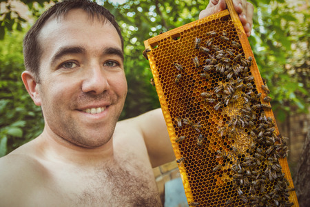 brood: Bees on honeycomb with capped brood Stock Photo