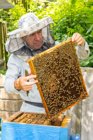 apiary: Beekeeper on apiary. Beekeeper pulling frame from the hive