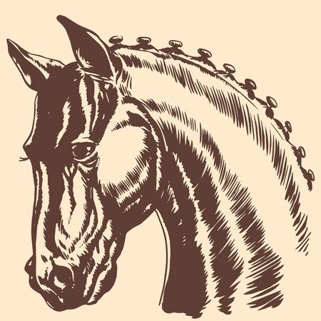 cabeza de caballo: Pura Sangre cabeza de caballo melena muestra el perfil de carreras. Animales gr�ficos perfil Vectores