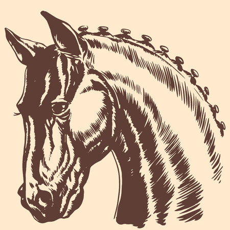 Thoroughbred horse head profile racing exhibition mane. Profile graphics animal