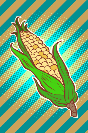 corn maize cob. appetizing vegetarian product. Comic cartoon pop art retro vector illustration drawing Stok Fotoğraf