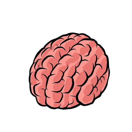 brain. the intelligence of the human mind