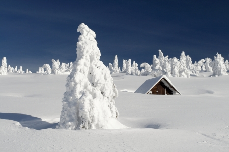 Snowy plain with a snowbound hut and snow-covered trees on a sunny winter day  photo