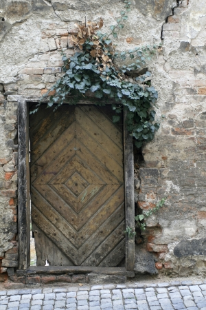 Old Door covered with ivy photo
