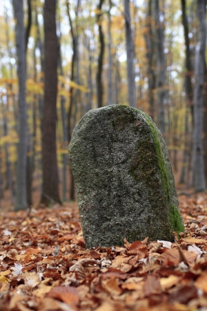 Old boundary stone in the middle of autumn beech forest