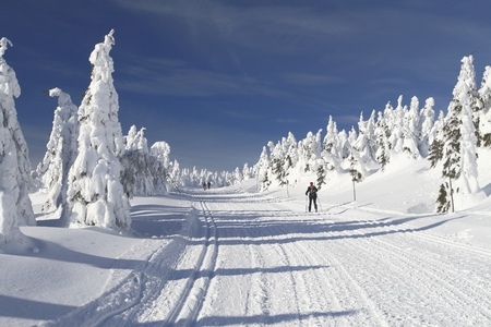Cross Country Ski Trail in Jeseniky mountains, Czech Republic  photo