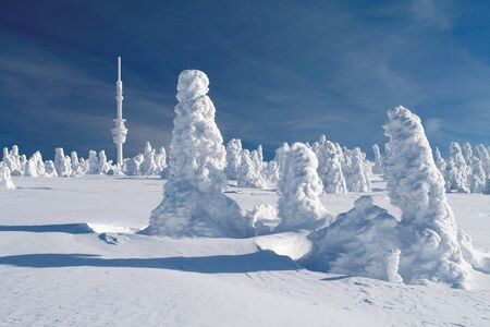 Snow covered spruces below the transmission tower on the top of Praded, Czech Republic  Stock Photo