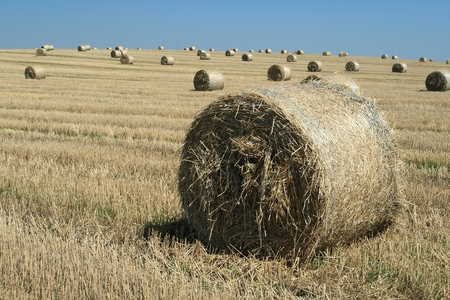 Harvested stubble field with round bales of straw Stock Photo