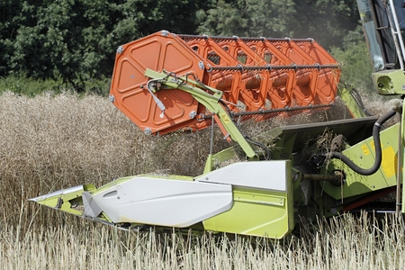 Modern combine harvester cutting oilseed rape crops. Close up of header. Stock Photo