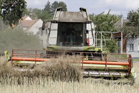 Modern Combine Harvesting and Rape Field