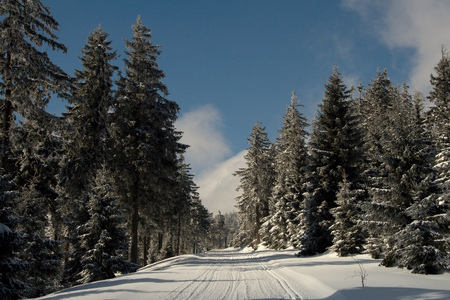 Snowy road in a spruce forest during a sunny winter day.