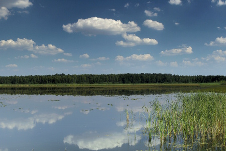 Blue sky and white clouds reflecting on the surface of a pond during a sunny summer day near Druskininkai, Lithuania. Stock Photo