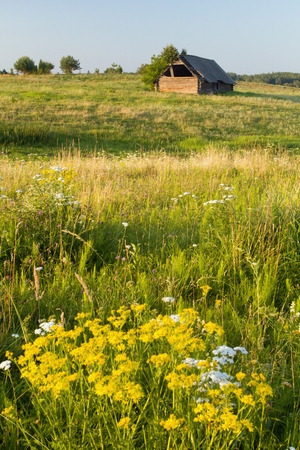 A blooming meadow with an old barn in the Lithuanian countryside