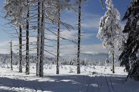 Winter landscape under Kralicky Sneznik, the highest peak of the same name in Eastern Bohemia, located on the border between Czech Republic and Poland. On its slopes springs the Morava river. Imagens