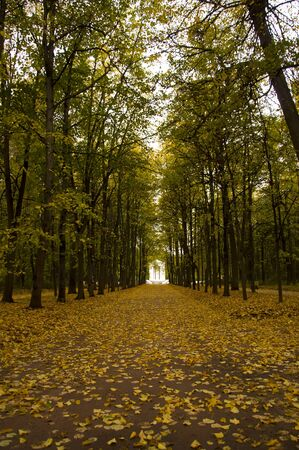Track in autumn park
