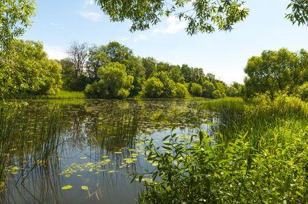River landscape in summer