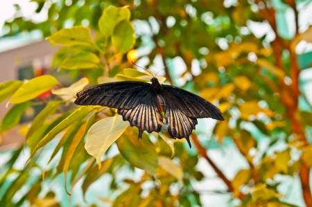 Tropical butterfly on a tree Stock Photo