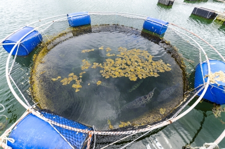 Fish farm in the province of Krabi Thailand photo