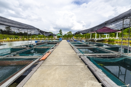 Fish farm in the province of Krabi Thailand