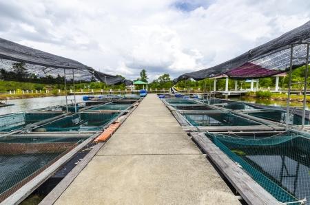 Fish farm in the province of Krabi Thailand