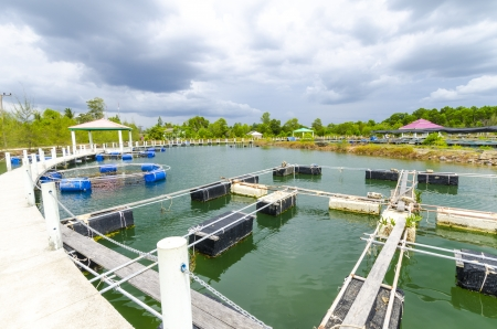 Fish farm in the province of Krabi Thailand Stock Photo - 18436779