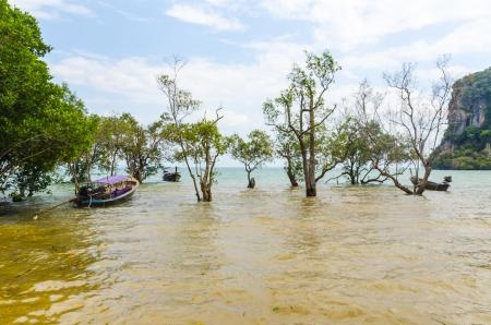 railey: Spiaggia Penisola Railey Krabi Thailandia