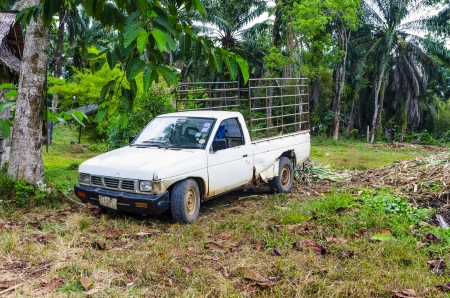 Farm truck SUV background jungle in Thailand