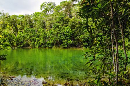 Jungle National Park in Krabi Thailand photo