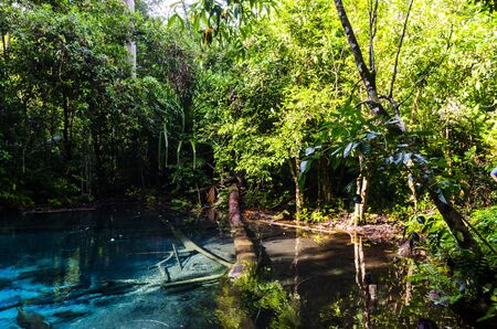 Jungle, tropical trees and blue lagoon in national park Thailand photo