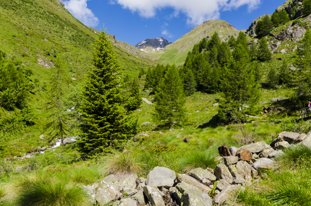 View of the Alps with rocks and vegetation in the summer in northern Italy, Lombardy, the region of Brescia Adamello peak on a clear day