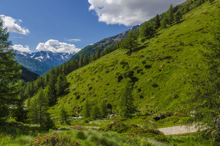 View of the Alps with  in the summer  Italy, Lombardy, the region of Brescia Adamello