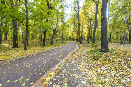 Pathway in the autumn park photo