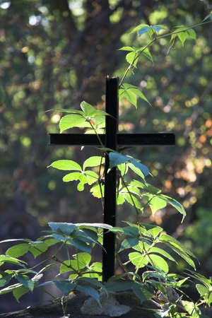 theological: Simple cross in the forest.