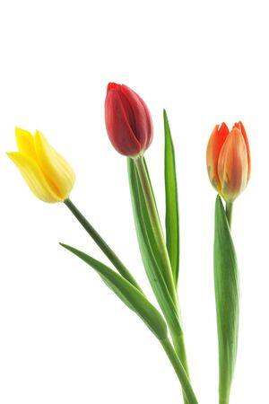 trio: Tulips Trio
