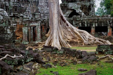 angkor: Ta Prohm temple scenic ruins in Angkor Wat complex, Cambodia, Siem Reap province Stock Photo