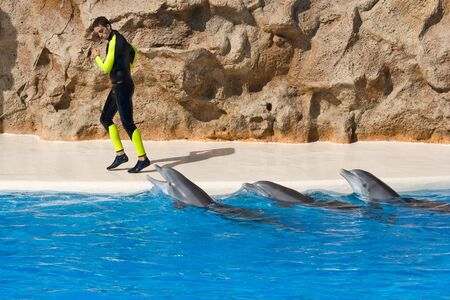 TENERIFE, CANARY ISLANDS, SPAIN - DECEMBER 26: Dolphin show at the Loro Parque dolphinarium in Tenerife, Canary Islands, Spain on December 26, 2006