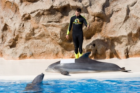 TENERIFE, CANARY ISLANDS, SPAIN - DECEMBER 26: Dolphin show at the Loro Parque dolphinarium in Tenerife, Canary Islands, Spain on December 26, 2006 Stock Photo - 11108940