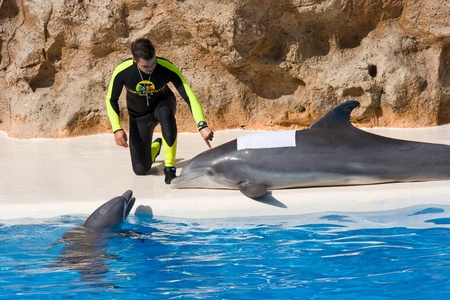 TENERIFE, CANARY ISLANDS, SPAIN - DECEMBER 26: Dolphin show at the Loro Parque dolphinarium in Tenerife, Canary Islands, Spain on December 26, 2006 Stock Photo - 11108935