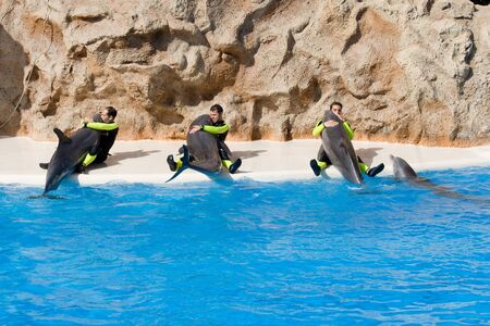 TENERIFE, CANARY ISLANDS, SPAIN - DECEMBER 26: Dolphin show at the Loro Parque dolphinarium in Tenerife, Canary Islands, Spain on December 26, 2006 Stock Photo - 11108928